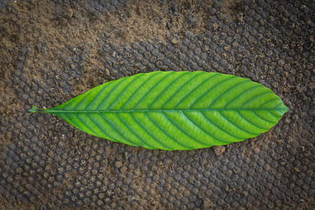 Single green leave on clay background