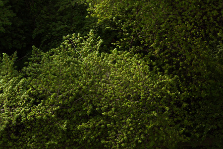 green background: Green leave abstract background