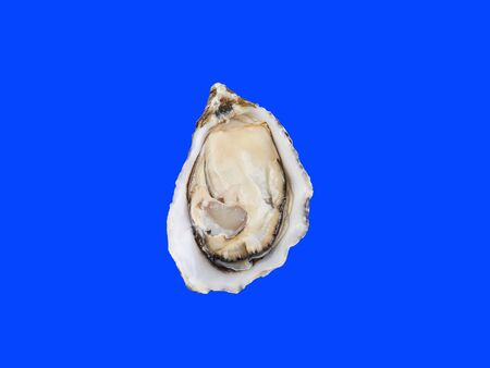 Skookum Inlet Oyster is fresh seafood from France. Isolated on blue