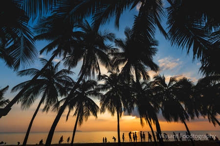 Silhouette coconut tree with people enjoyment is summer on the beach, Sunset time