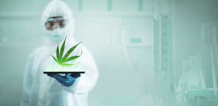 Researching marijuana or cannabis in scientific laboratories for medicinal benefits Standard-Bild