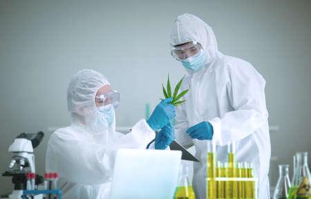 Researching marijuana or cannabis in scientific laboratories for medicinal benefits, Oil Cannabis Standard-Bild