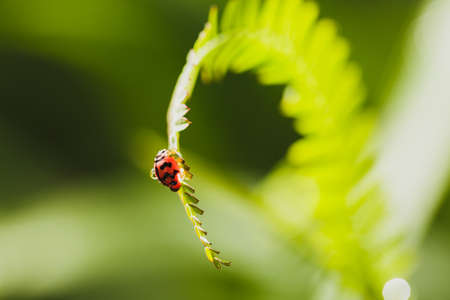 Bug on leaves with copy space natural concept Standard-Bild
