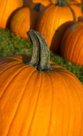 Bright orange pumpkins for sale at  a farm stand photo