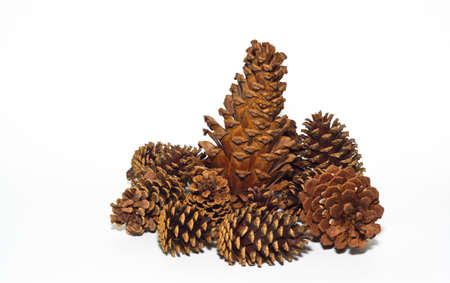 Group of pine cones on a white background photo