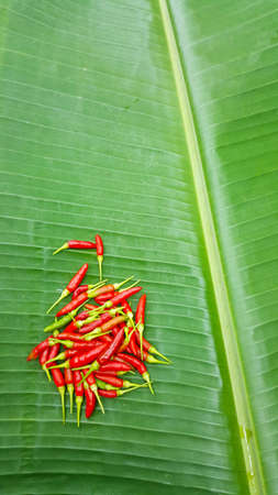 Banana leaf with chili texture background green.