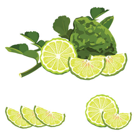 lime fruit with green leafs Illustration