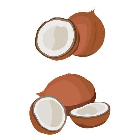 Coconut fruit fresh.