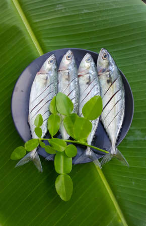 Mackerel fish on plate in banana leaf 版權商用圖片