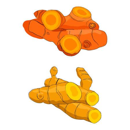 Racines de curcuma fraîches Vecteurs