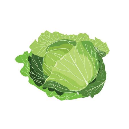 cavolo vegetale vettoriale