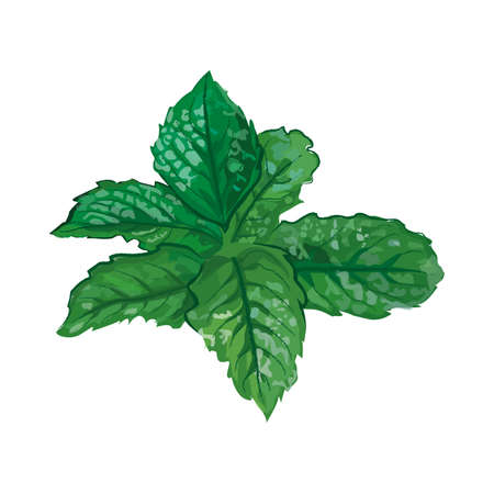 peppermint leaf fresh