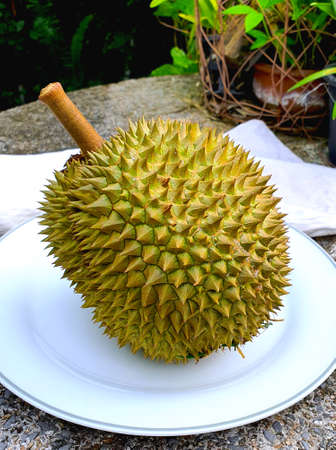 thai fruit durian products agricultural products 版權商用圖片