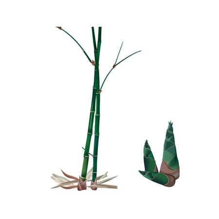 Bamboo plan