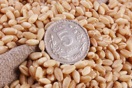 five rupee: Indian 5  five   rupee coin with wheat grains Stock Photo