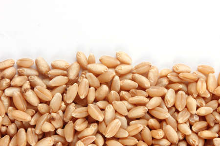Grains of wheat close-up photo