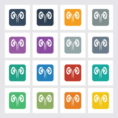 Very Useful Flat Icon of Kidneys with Different UI Colors. Illustration
