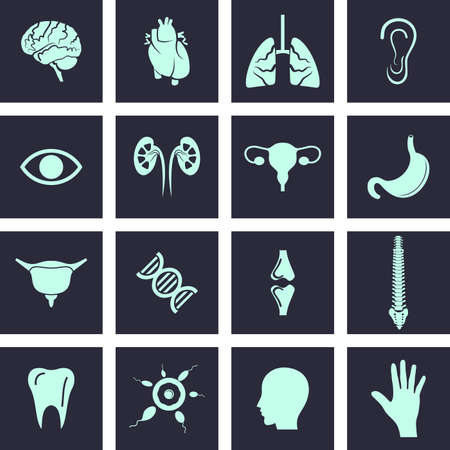 body line: Human Body Parts -  icon set For Web  Mobile. Eps-10. Stock Photo