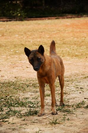distrustful: The dog is  wonder Stock Photo