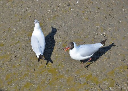 dual: Dual Seagull