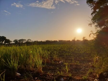 sun, field, farm and Sky. beautiful Nature landscapes Foto de archivo