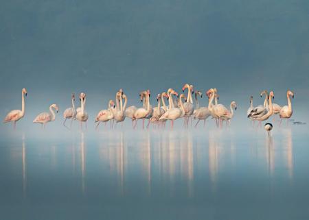 Foggy Flamingos