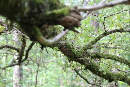 mossy: Mossy branch