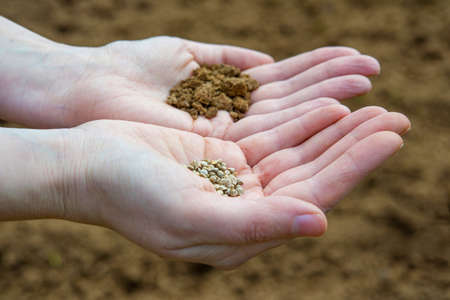 earth handful: Seeds in a hand on a farm