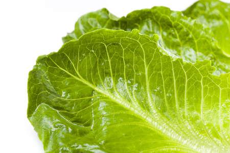 romaine: Fresh green romaine lettuce against a white background