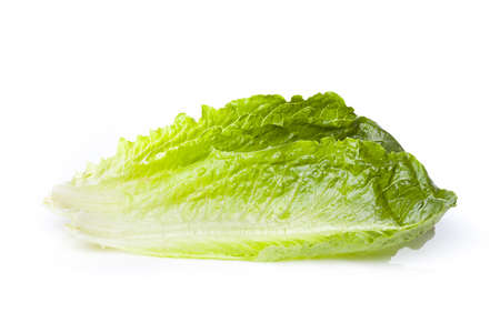 lechuga: Fresh green romaine lettuce against a white background