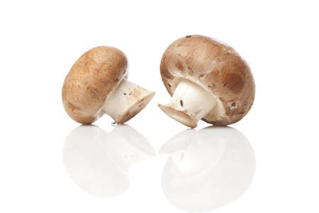 wild mushrooms: A fresh brown mushroom against a white background