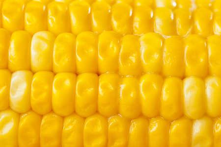 elote: Fresh Corn Orgánica amarillo en la mazorca en un fondo