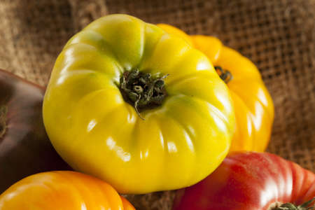 heirloom: Fresh Organic Ripe Heirloom Tomatoes in a variety of colors Stock Photo