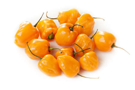 hottest: Organic Hot and Spicy Habanero Peppers against a background