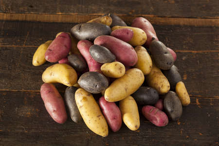 fingerling: raw organic fingerling potato medley against a background