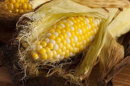 husk: Organic Grilled Corn on the Cob Ready to Eat Stock Photo