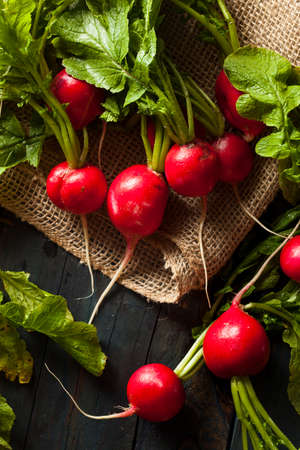 Organic Raw Red Radishes in a bunch photo