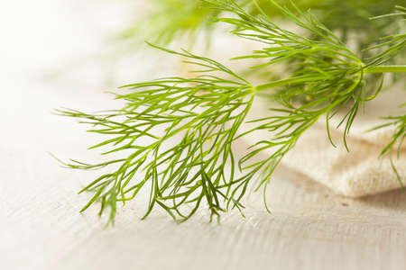 Organic Green Dill Herb on a Background photo