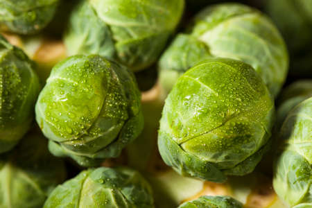 Raw Green Organic Brussel Sprouts on the Stalk 写真素材