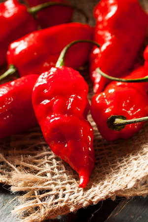 Spicy Hot Bhut Jolokia Ghost Peppers on a Background photo