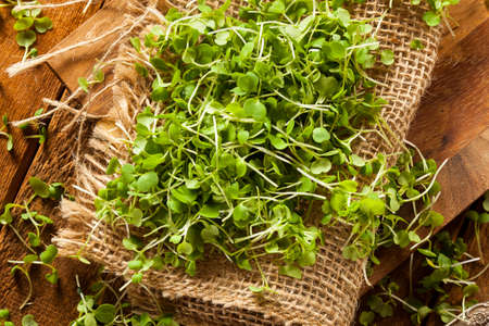 Raw Green Arugula Microgreens on a Background Stock Photo