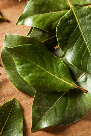 Green Organic Bay Leaves Ready to Use Banque d'images