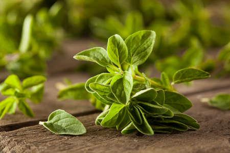 Raw Green Organic Oregano Ready to Use