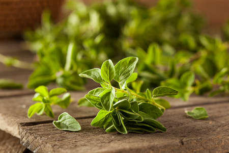 Raw Green Organic Oregano Ready to Use