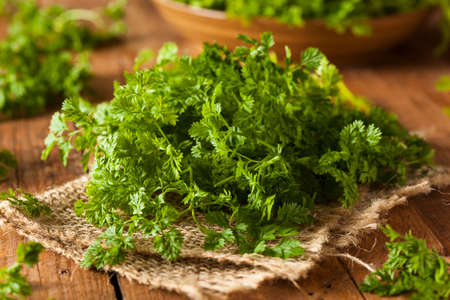 Raw Organic French Parsley Chervil on a Background Stock Photo