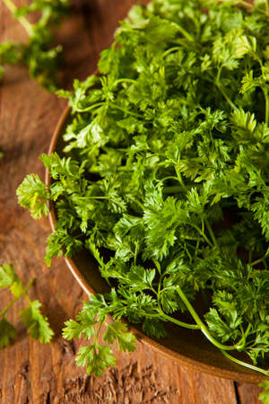 Raw Organic French Parsley Chervil on a Background photo