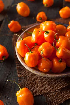 habanero: Raw Organic Orange Habanero Peppers on a Background