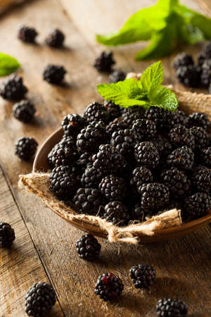 plant antioxidants: Fresh Raw Organic Blackberries in a Bowl Stock Photo