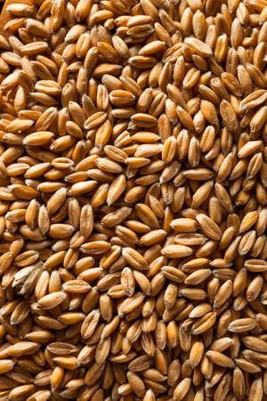 spelt: Raw Organic Spelt Grain in a Bowl