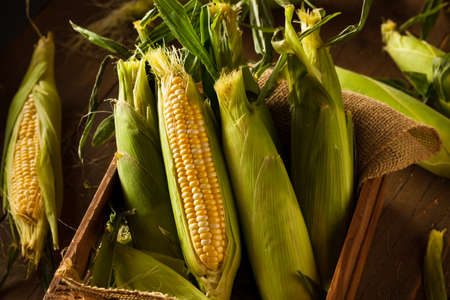 elote: Crudo Orgánico dulce amarillo callos listo para cocinar